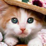 0be3f4e6cb60dadb72e36ea5eb9020fe 150x150 - 猫の里親探しをブログで応援 東京,千葉,埼玉,神奈川他 かわいい画像,動画