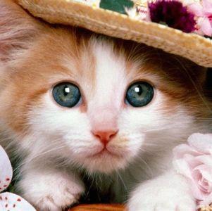 0be3f4e6cb60dadb72e36ea5eb9020fe - かねキリカさんの猫♡、やまだくんはでれでれねこ。おっさんねこなのに~