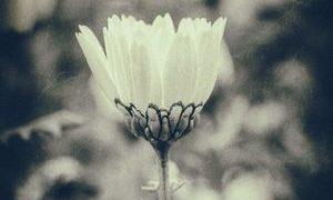 cb8ad8f69998192e1c5c276070c329dc 300x180 - SMAP最後の曲は「世界で一つだけの花」。一方、存続を願う書名は37万人に達する勢い!