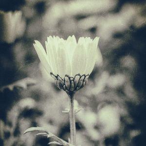cb8ad8f69998192e1c5c276070c329dc - SMAP最後の曲は「世界で一つだけの花」。一方、存続を願う書名は37万人に達する勢い!