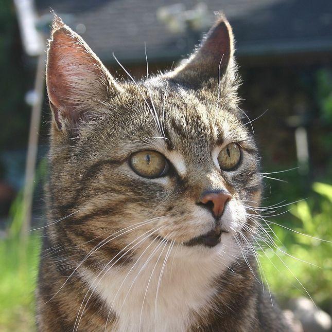 pet 761675 1280 - 猫の里親探しをブログで応援 東京,千葉,埼玉,神奈川他 かわいい画像,動画
